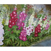 Hollyhocks standing tall Preview