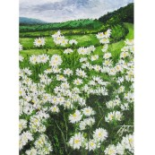 Daisies at Vale Farm Preview